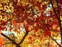 fall-at-ditman-lane-010.jpg